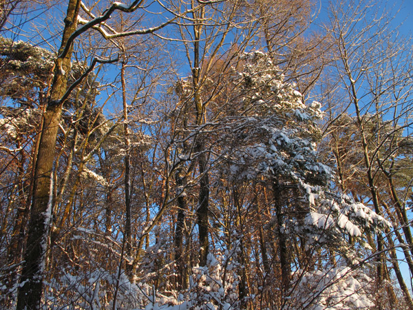 Wald in Ebersberg